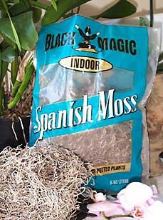 Orchid Moss Spanish
