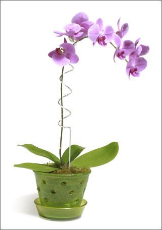 pot orchid e pantone lilas. Black Bedroom Furniture Sets. Home Design Ideas