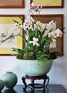 Home Design Grand Orchid Arrangement