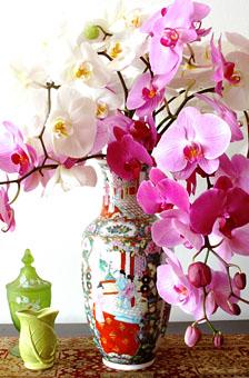 Luxurious Orchids Pahalaenopsis Amp Chinese Life Vase