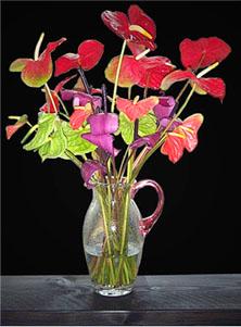 Anthuriums Mix Bouquet