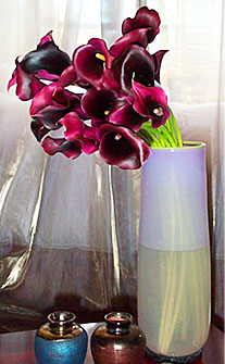 New Zealand Black Ryvale Calla Lily