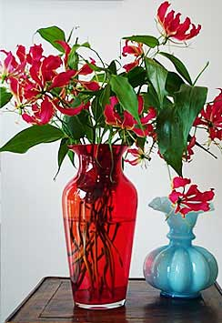 oriental lily care instructions